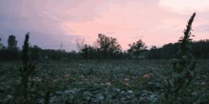 farm Gallery IMG 8121 300x150